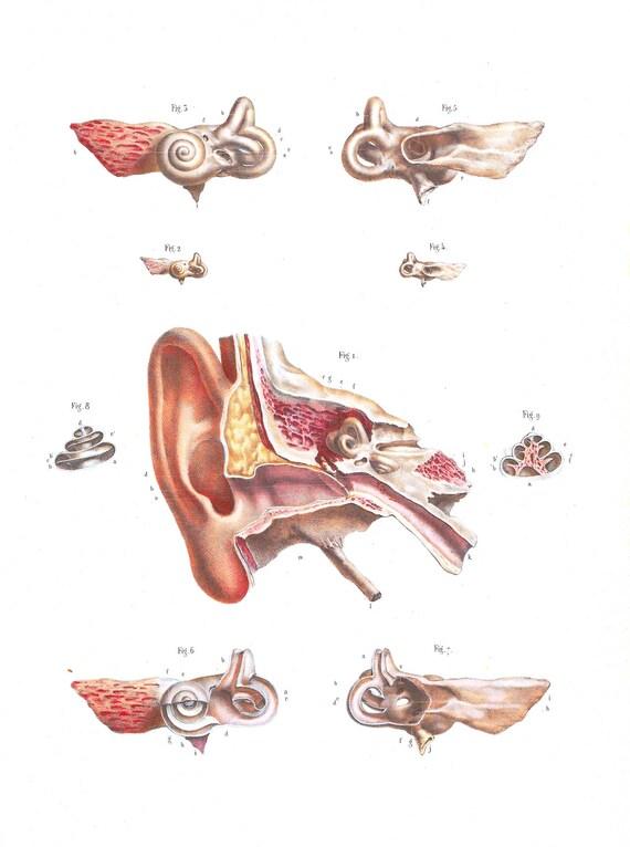 Anatomie-Kunst Ohren hören ENT Ohr Arzt Geschenk Pflege | Etsy