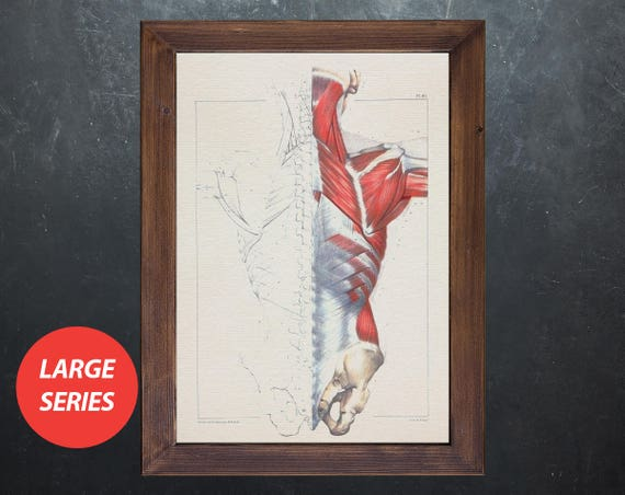 Anatomy art BACK DRAWING MUSCLES doctor gift nursing student   Etsy