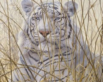 White tiger bengal wild animal wildlife big cat counted cross stitch pattern