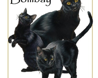 Bombay black cat breed counted cross stitch pattern