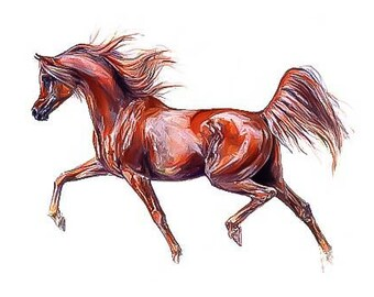Arabian horse arab  counted cross stitch pattern PDF