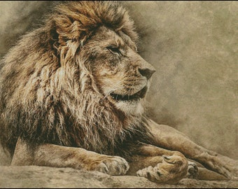 Lion and Lioness counted cross stitch pattern