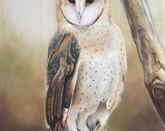 A Barn Owl counted cross stitch pattern