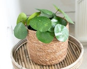 Pilea Peperomioides Cute Fake Plant, Artificial Plant, Scandinavian Home Decor, Chinese Money Plant, Indoor Greenery, Trendy Houseplant