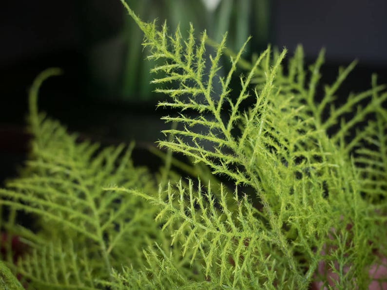 12 ARTIFICIAL INDIVIDUAL LEAVES of FLOCKED ASPARAGUS FERN