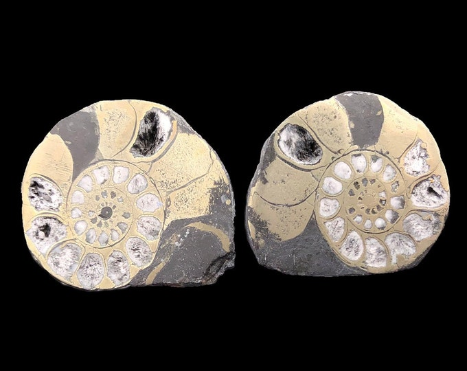 "Cobble Creek: Pyrite Polished Ammonite Pair - Morocco - Natural - 1.2"" / 31mm"