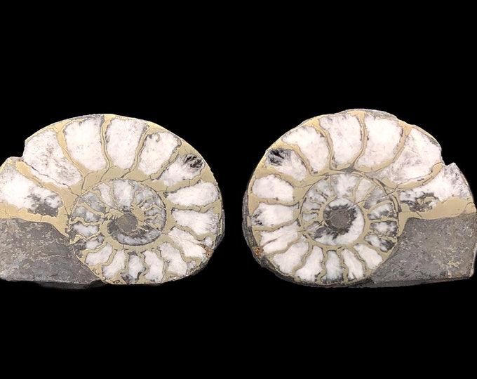 """Cobble Creek: Pyrite Polished Ammonite Pair - Morocco - Natural - 1.2"""" / 30 mm"""