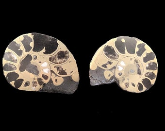 "Cobble Creek: Pyrite Polished Ammonite Pair - Morocco - Natural - 1.3"" / 35 mm"