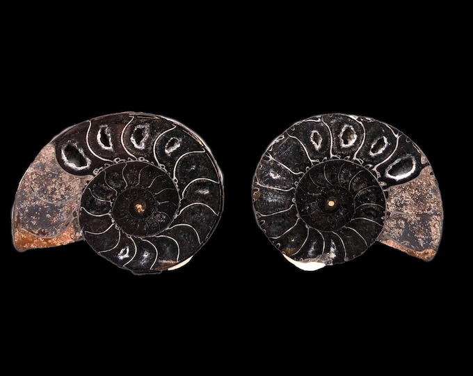 "Cobble Creek: 2.0"" / 50 mm Polished Ammonite Pair - Hematite and Calcite - Madagascar - Natural"