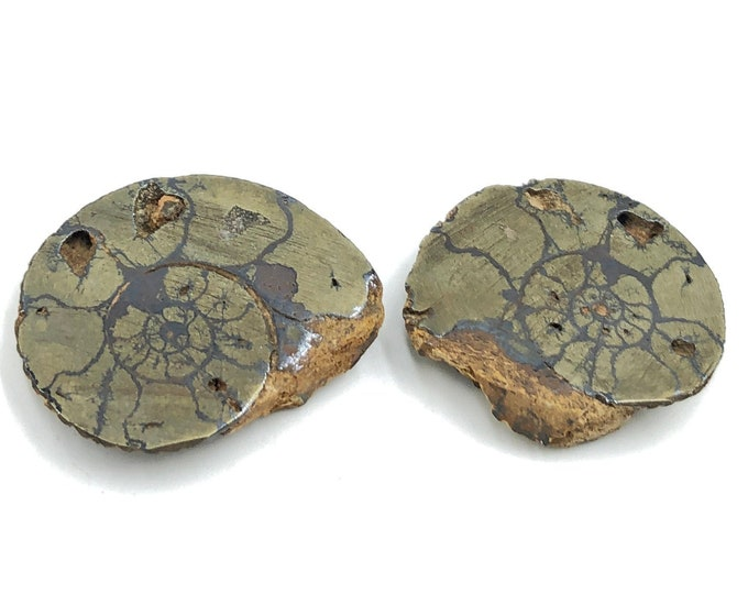 "Cobble Creek: Pyrite Polished Ammonite Pair - Morocco - Natural - 1.1"" / 29 mm"