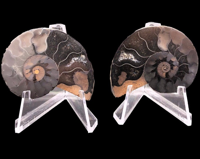 "Cobble Creek: 2.0"" / 52 mm Polished Ammonite Pair - Hematite and Calcite - Madagascar - Natural"