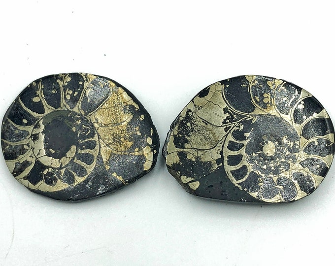"Cobble Creek: Pyrite Polished Ammonite Pair - Morocco - Natural - 1.3"" / 34 mm"