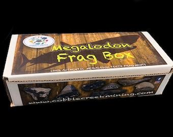 REAL Megalodon Teeth Frag Box 10 pieces in each box!!