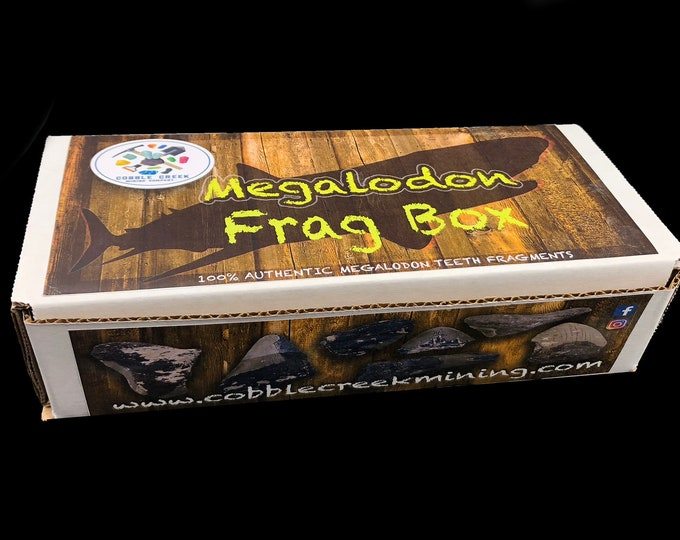 REAL Megalodon Teeth Frag Box 10 pieces in each box!!