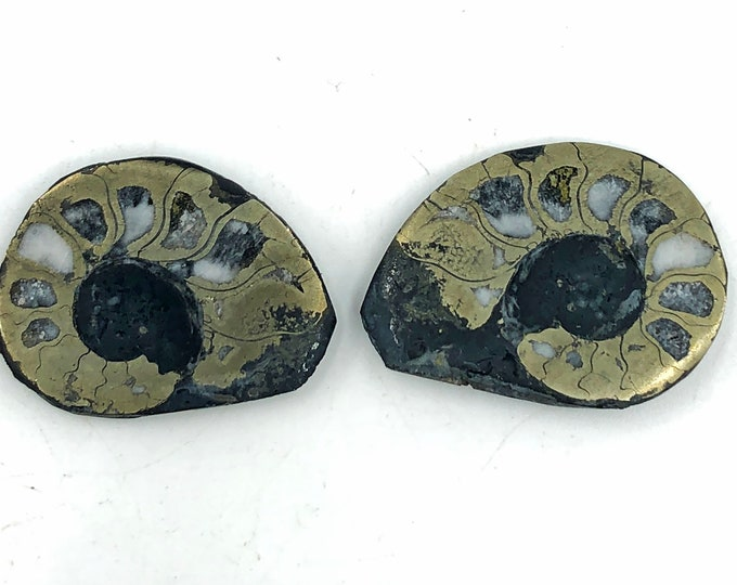 "Cobble Creek: Pyrite Polished Ammonite Pair - Morocco - Natural - 1.2"" / 32 mm"