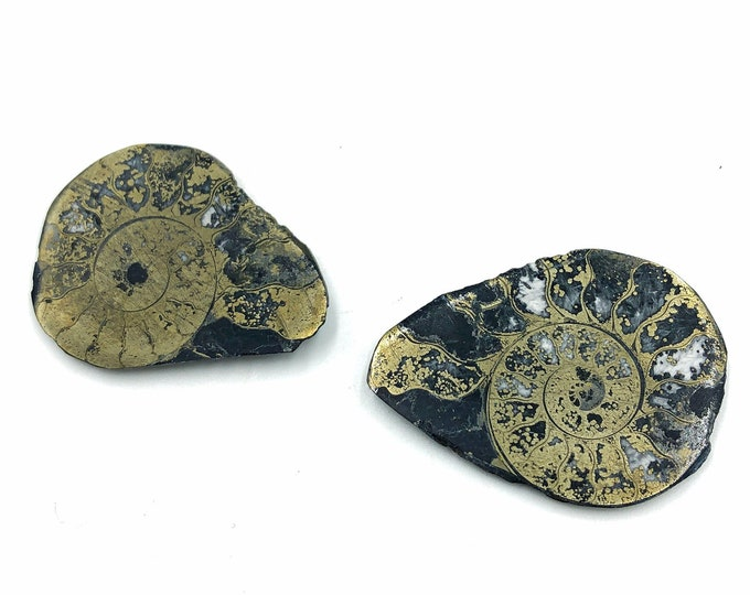 "Cobble Creek: Pyrite Polished Ammonite Pair - Morocco - Natural - 1.5"" / 39 mm"