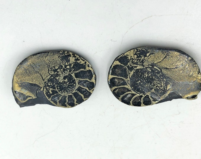 "Cobble Creek: Pyrite Polished Ammonite Pair - Morocco - Natural - 1.2"" / 31 mm"