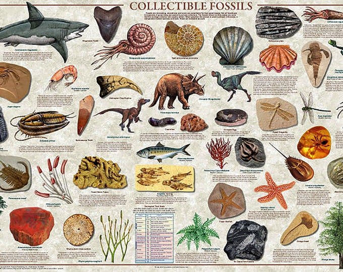 Collectible Fossils Poster