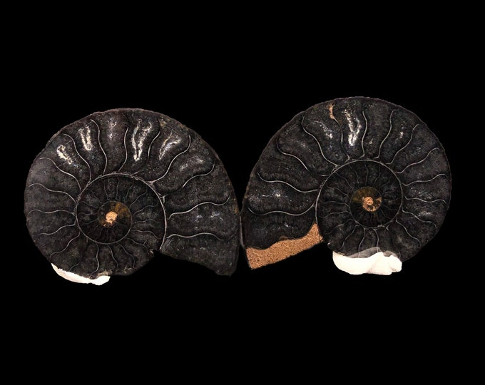 "Cobble Creek: 1.9"" / 50 mm Polished Ammonite Pair - Hematite and Calcite - Madagascar - Natural"