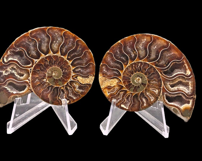 Cobble Creek: 64 mm Polished Ammonite Pair from Madagascar