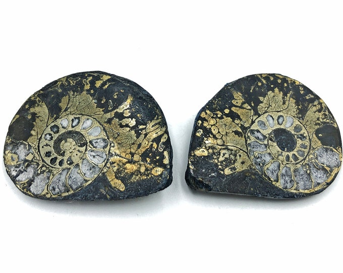 "Cobble Creek: Pyrite Polished Ammonite Pair - Morocco - Natural - 1.4"" / 36 mm"