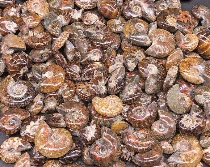 "Cobble Creek: 5 Pack of Polished Red Iridescent Flash Small Ammonites from Madagascar 1/2"" to 1.5"""