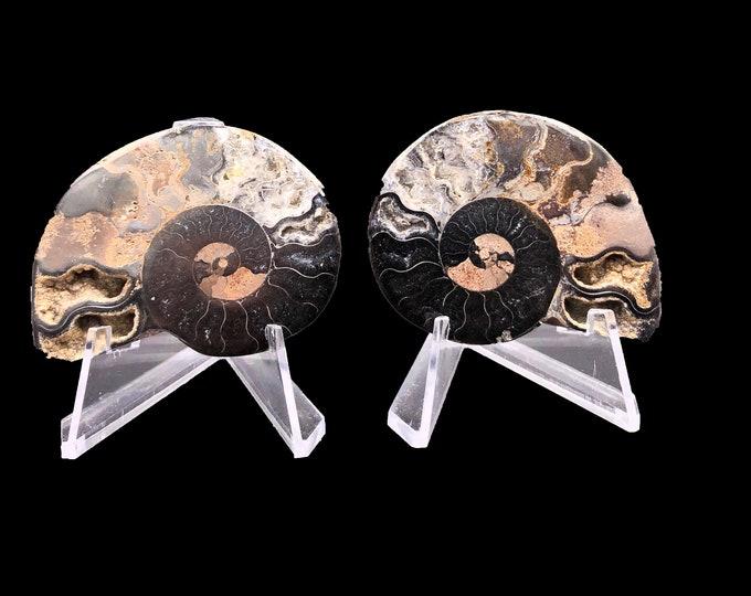 "Cobble Creek: 2.1"" / 54 mm Polished Ammonite Pair - Hematite and Calcite - Madagascar - Natural"