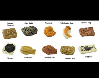 Cobble Creek: Fossil Replica Kit