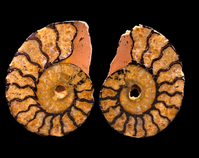 Cobble Creek: Ammonite Pair Halves with Hematite - Polished Face - from Morocco