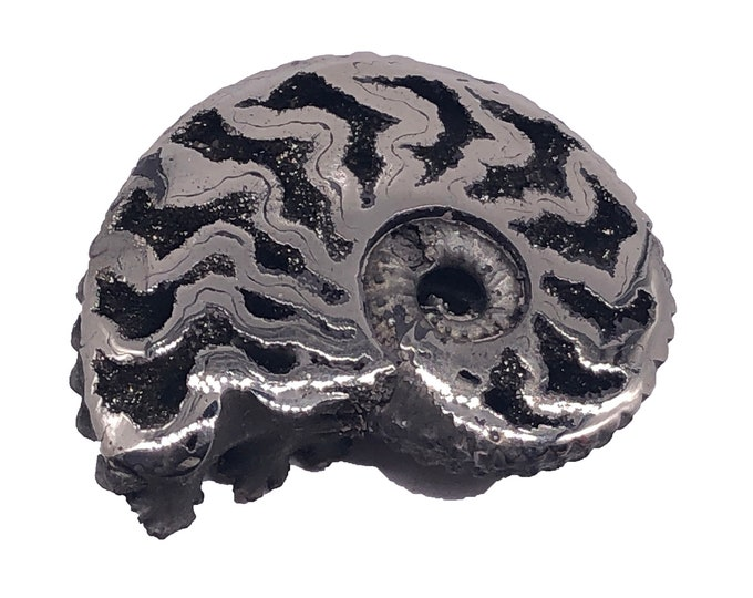 Cobble Creek: Polished Pyritized Ammonite from Mikhailovsky Quarry, Ryazan, Russia