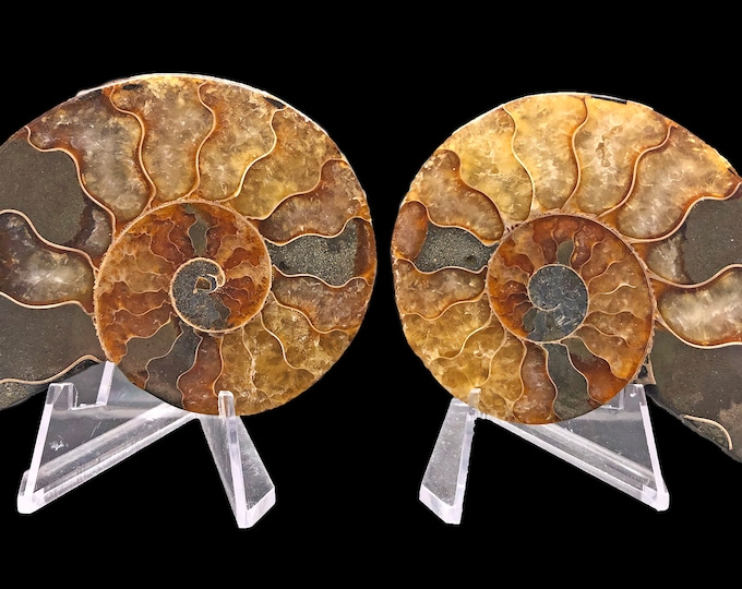 Cobble Creek: 80 mm Polished Ammonite Pair from Madagascar