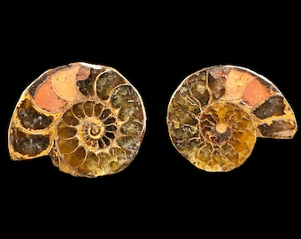 30mm Polished  Ammonite  Pair from Madagascar