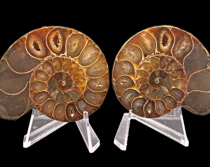 Cobble Creek: 65 mm Polished Ammonite Pair from Madagascar