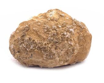 Big 1.25LB Break Your Own Geodes from Morocco - Druzy Quartz / Calcite