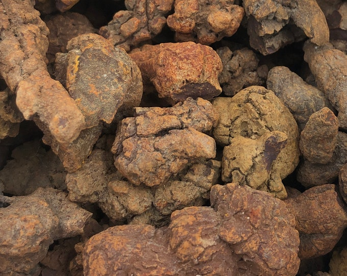 Cobble Creek: Coprolite from Madagascar - Fossil Poo!