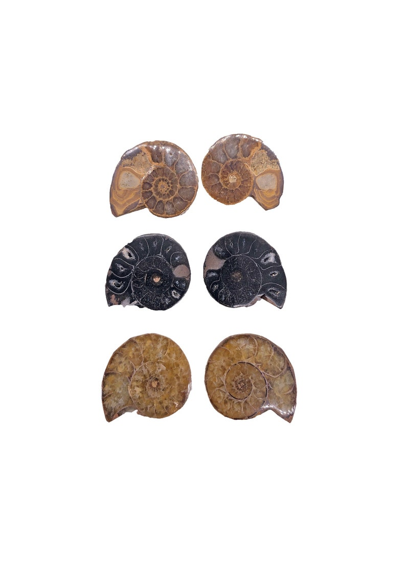Cobble Creek: 3-Pack of Ammonite Pairs from Madagascar 20mm  image 0
