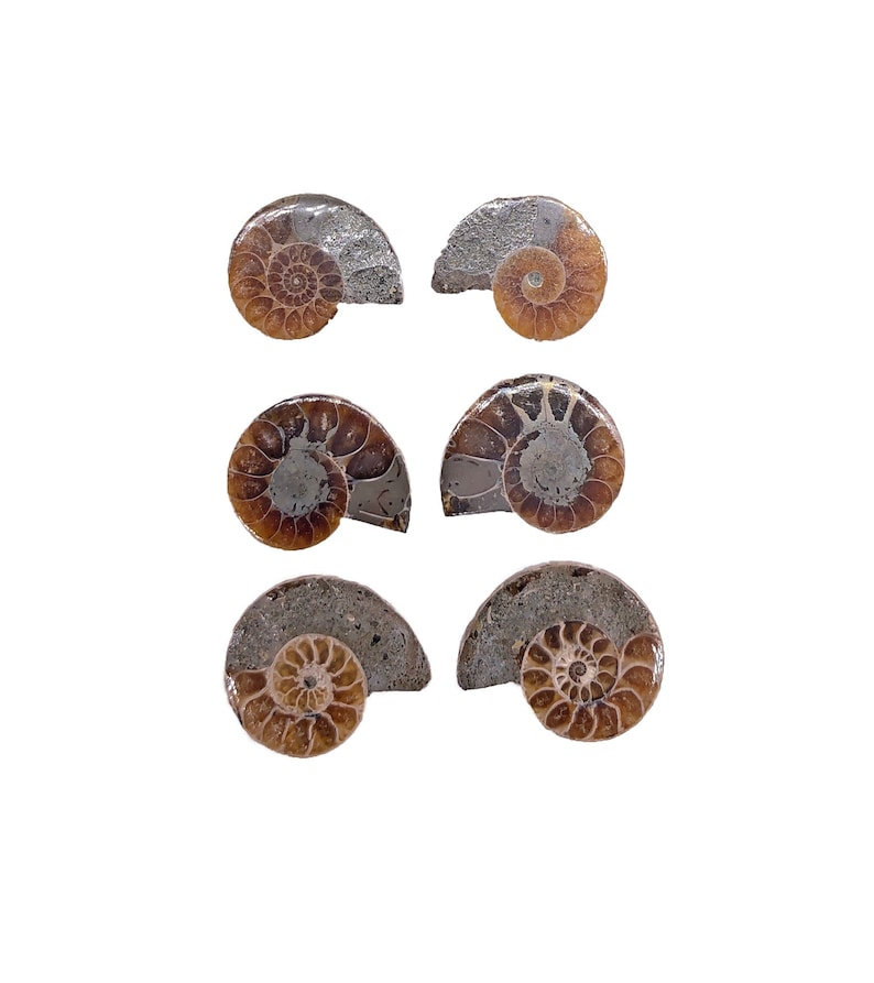 Cobble Creek: 3-Pack of Small Ammonite Pairs from Madagascar image 0