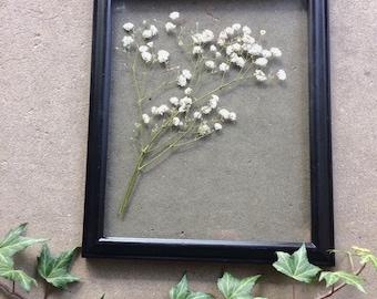 Gypsophila- botanical wall art