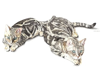 Pet Portrait - Drawing of two / Unframed