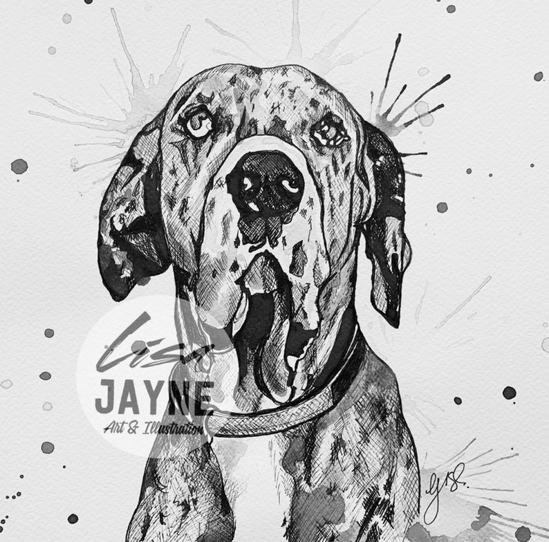 English Print Great Dane Dog Art Picture