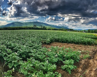Mountains & Fields - Rumford, Maine - Photography