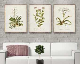 Vintage Botanical Three Poster Set, Coral And Green 3 Poster Set, Vintage  Botanical Prints, Coral Wall Art, Coral Wall Art Trend [31 33 35]