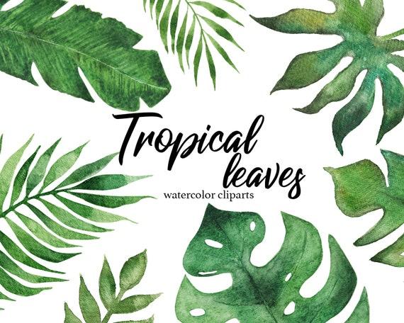 Tropical Leaves Watercolor Clip Art Digital Botanical Leaf png Monstera  Palm Banana Leaf Green Leaves Wedding Scrapbooking Intant Download