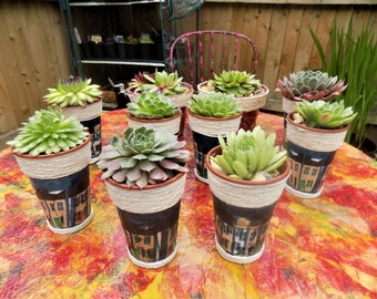 Sempervivum Succulent Plants in a decoupage Pot. Free Postage in the UK. Perfect for Gifts, Wedding Favours, Mothers Day.