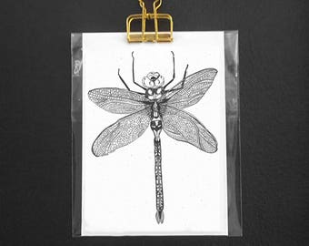 Insect postcard - Dragonfly