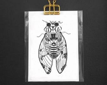 Insect postcard - Cicada