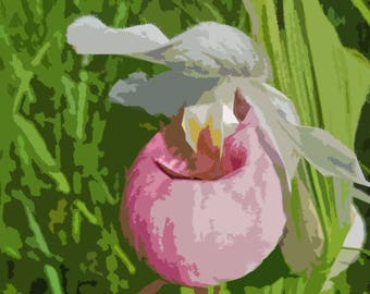 Pink ladys slipper etsy pink and white lady slipper abstract instant download mightylinksfo