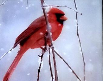 Snow Cardinal #3