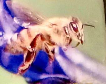 Honeybee #1