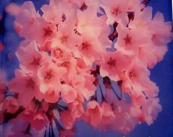 Cherry Blossom #4